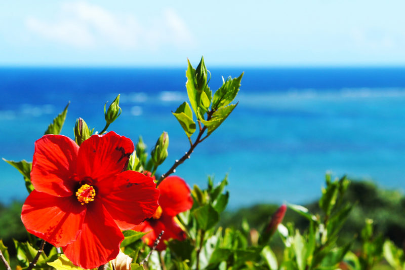 沖縄社員旅行で本島&石垣島を満喫しよう!おすすめのモデルコースをご紹介